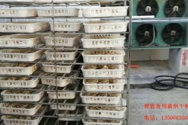 食用菌烘干机:白玉菇烘干机怎么选择