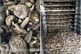 香菇烘干机 香菇烘干房 香菇烘干设备
