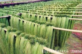 蔺草烘干机 蔺草烘干房 蔺草烘干设备