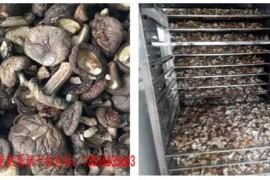蘑菇烘干机 蘑菇烘干设备 蘑菇烘干工艺
