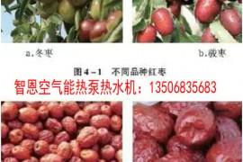 红枣热泵烘干工艺应用