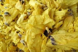 黄蜀葵热泵干燥工艺应用