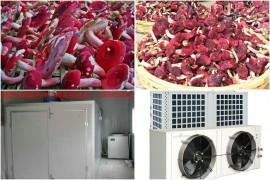 如何使用红菇烘干机将红菇烘干成干品的您知道吗?