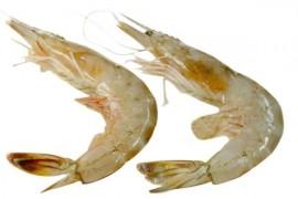 海虾烘干工艺,海虾用什么烘干