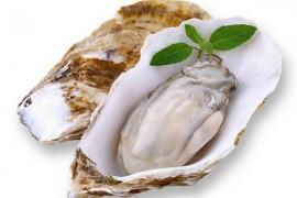 牡蛎烘干工艺,牡蛎如何烘干,生蚝烘干