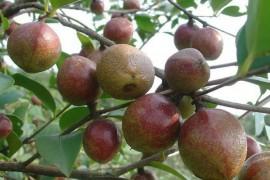 油茶籽烘干工艺,油茶籽烘干技术