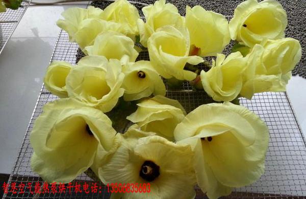 金花葵烘干机