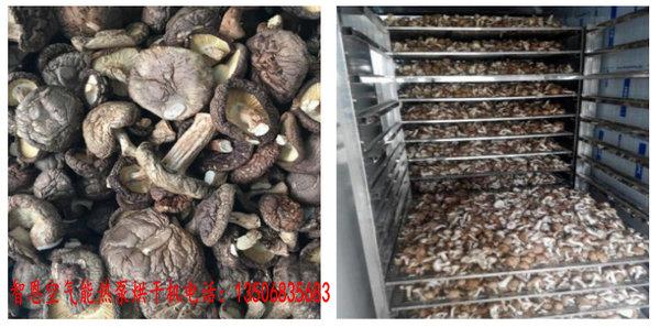 蘑菇烘干机