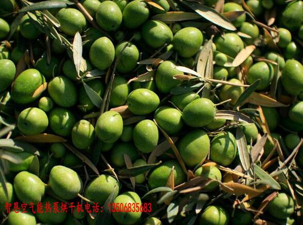 橄榄果烘干机